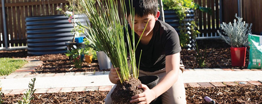 A young boy planting a plant in the garden with mulch.