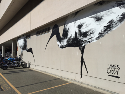 Ibis mural created on the external wall of our Leederville office as part of PUBLIC2015